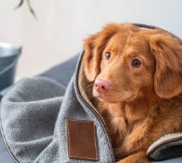 Cozy up Your Home with Christmas Pet Blankets